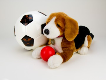 Beagle with Soccer Ball