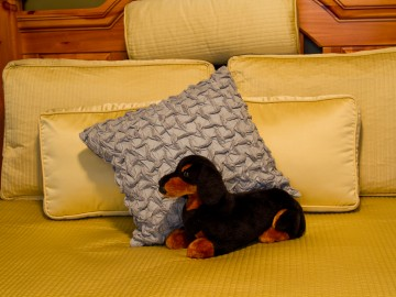 Dachshund on Bed
