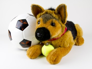 German Shepherd with Soccer and Tennis Ball