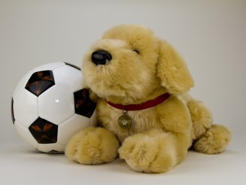 Golden Retriever with Soccer ball